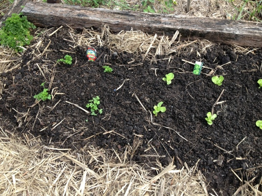 The first seedlings