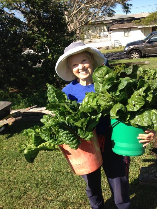 buckets of silver beet/ chard