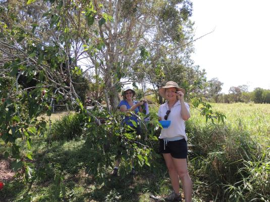 Jo and Maria picking mulberries